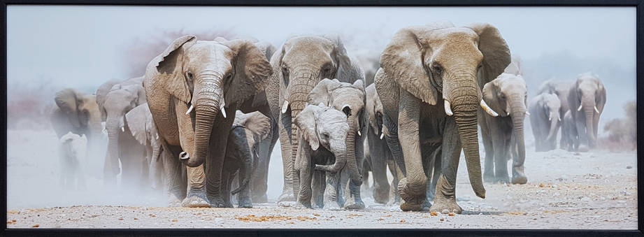 "Фотокартина в деревянной раме ""Elephants 4"", 50х140 см, фото 2"