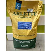 Семена подсолнечника Арлет  Екстра