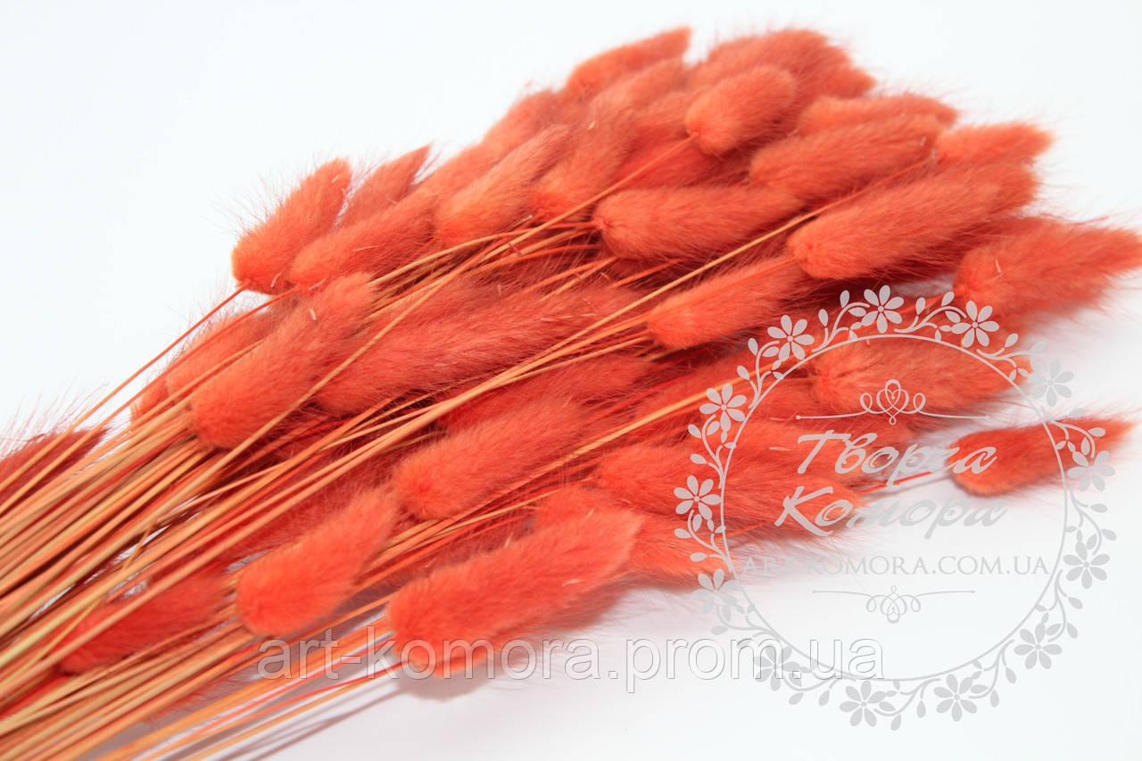 Сухоцвет лагурус морковно-корраловый, пучек