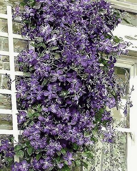 Картина по номерам 40×50 см. Mariposa Цветы на шпалере (Q 430)