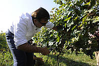 Саакашвили продал авторское вино за 700 евро