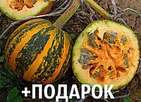 Тыква голосеменная семена 10 шт насіння гарбуза + подарок + инструкции