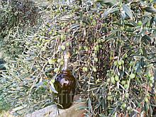 Оливковое масло Агорелио, домашнее, extra virgin.