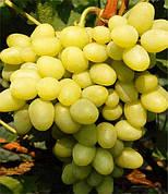 Саженцы винограда Аркадия(ранний,гроздь крупная,-21)