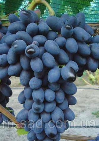 Виноград  Кодрянка(столовый,крупный,вкусный,-22), фото 2