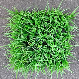 Трава коврик густой.25*25 см