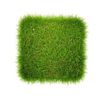 Семена газонных трав.