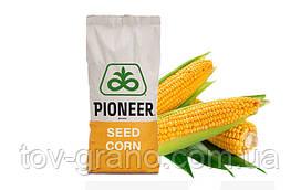Семена кукурузы (Пионер) P0216 ФАО 480