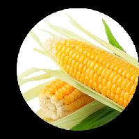 Роттердам F1 кукуруза супер сладкая Мнагор 1000 семян