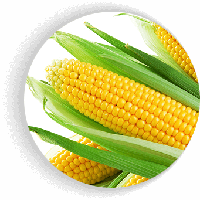 Гермиона F1 (Юрмала F1) кукуруза супер сладкая Мнагор 1000 семян