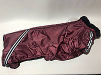 Комбинезон на меху 47 см разм Такса бордовый для собак