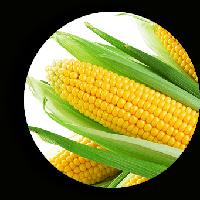 Гермиона F1 (Юрмала F1) кукуруза супер сладкая Мнагор 100 000 семян
