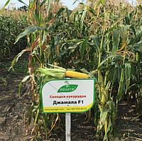 Джамала F1 кукуруза супер сладкая Мнагор 100 000 семян