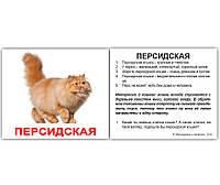 """МИНИ карточки (рус.-англ.) """"Породы кошек с фактами""""(379512)"""