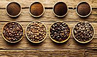 В чем отличие кофе сортов арабика и робуста