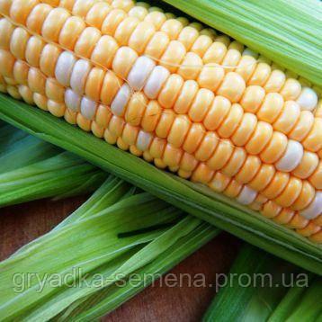 Мраморная F1 биколор кукуруза супер сладкая Мнагор 4000 семян