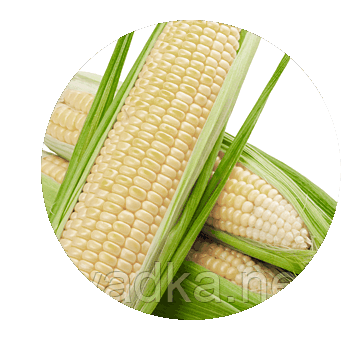 Белый кролик F1 кукуруза супер сладкая Мнагор 100 000 семян