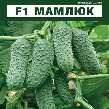 Семена огурца Мамлюк F1 (Гавриш), 500 семян — партенокарпический корнишон, ранний (38-43 дн.)