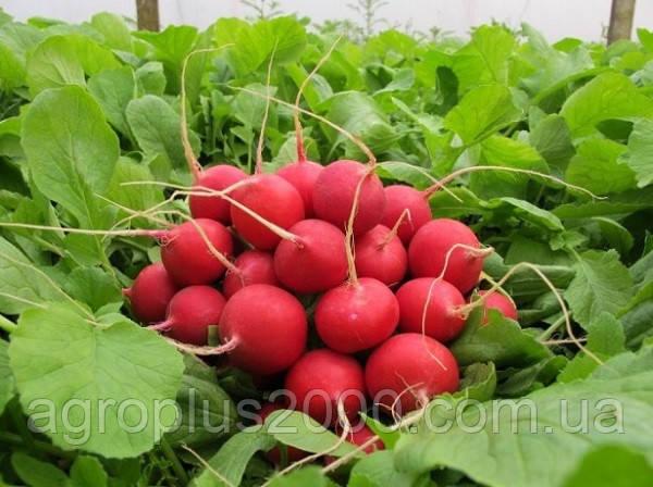 купить семена редиса селеста оптом