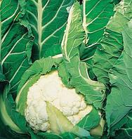 Семена цветной капусты Авизо F1, Clause 10 000 семян | профессиональные