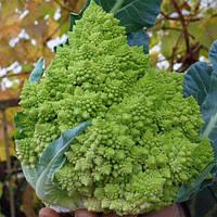 Семена цветной капусты Джитано F1, Clause 10 000 семян   профессиональные