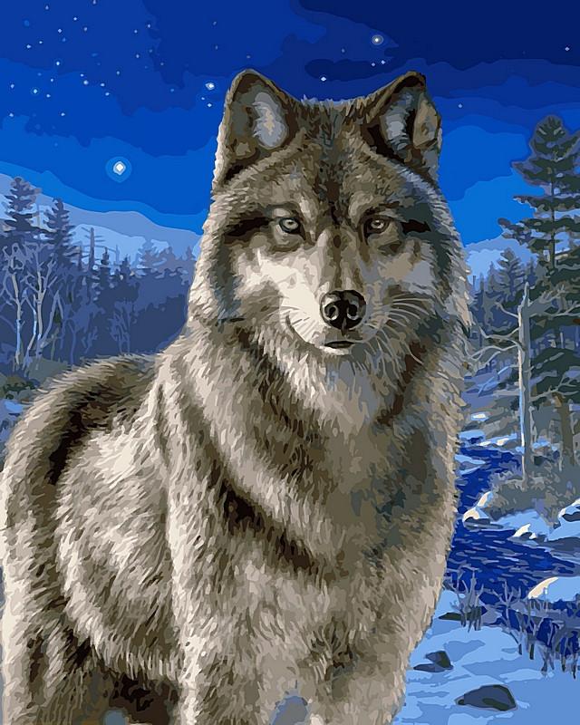 Картина по номерам 40×50 см. Babylon Волк в зимнем лесу (VP 467)