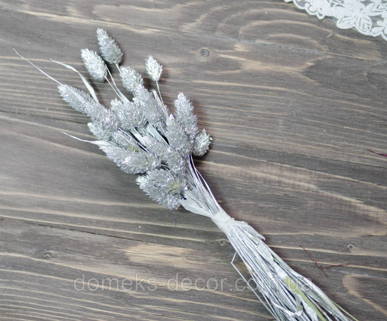 Сухоцвет фалярис 30 шт серебристого цвета, фото 1