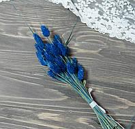 Сухоцвет фалярис 30 шт синего цвета