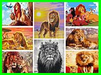 Картины по номерам Король лев Симба Львы 40*50 30*40см Раскраска по цифрам