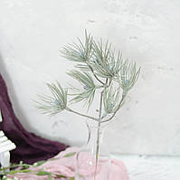 Ветка сосны с почками, фото 1