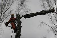 Спиливание деревьев, кронирование деревьев, фото 1
