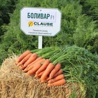 Семена моркови Боливар F1 (1.6-2.0), Clause 100 000 семян | профессиональные