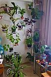 "Подставка для цветов на 16 чаш ""Цветок"", фото 3"