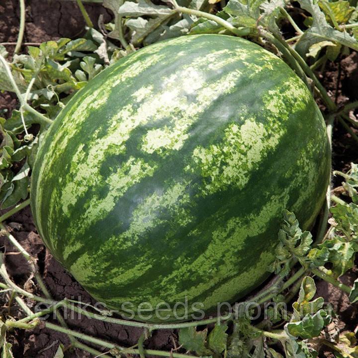 Арбуз KS 165 F1 семена