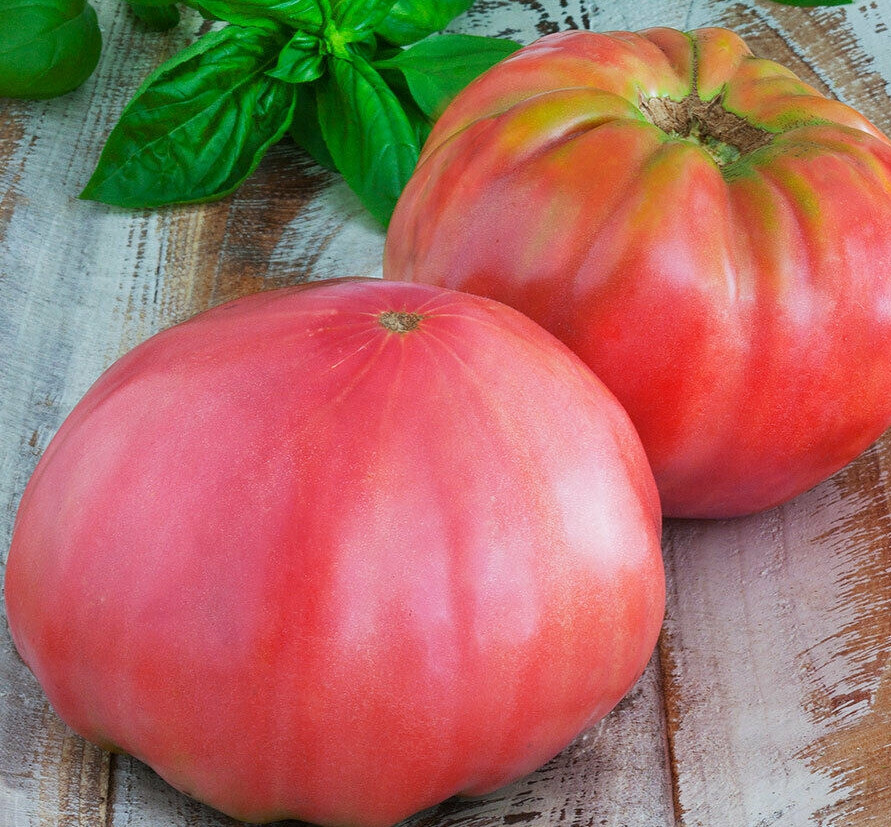 Семена томатов Розовый триумф
