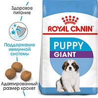 Royal Canin (Роял Канин) Giant Puppy корм для щенков от 8 до 18/24 мес,  15кг