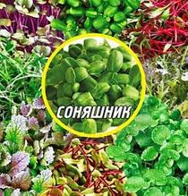 Семена Подсолнуха для микрозелени
