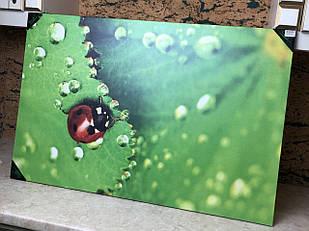 Картина фотокартина велика зелена Божа Корівка