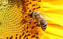 Мед, экологически чистый от производителя  оптом  из степей Херсонщины