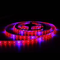 Светодиодная фитолента, фитолампа, LED FITO GreenHouse 5м влагозащитная IP65