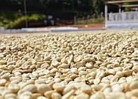 Кофе зеленый в зернах Сальвадор SHG (ОРИГИНАЛ), арабика Gardman (Гардман), фото 1