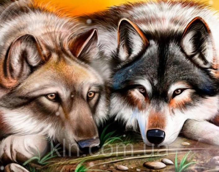 Алмазная вышивка на подрамнике Волчья любовь 40 х 50 см (арт. TN893) полная выкладка