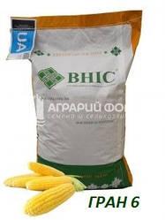 Семена кукурузы Гран 6 ВНИС / Насіння  кукурудзи ГРАН 6 ВНІС