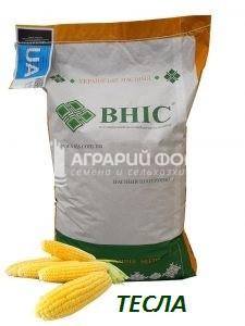 Семена кукурузы Тесла ВНИС / Насіння  кукурудзи Тесла ВНІС