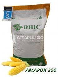 Семена кукурузы Амарок 300 (ФАО 330) / Насіння кукурудзи АМАРОК 300 ВНІС/