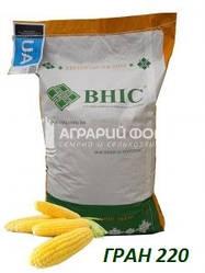 Семена кукурузы Гран 220 / Насіння  кукурудзи ГРАН 220 (ФАО 210) ВНІС/