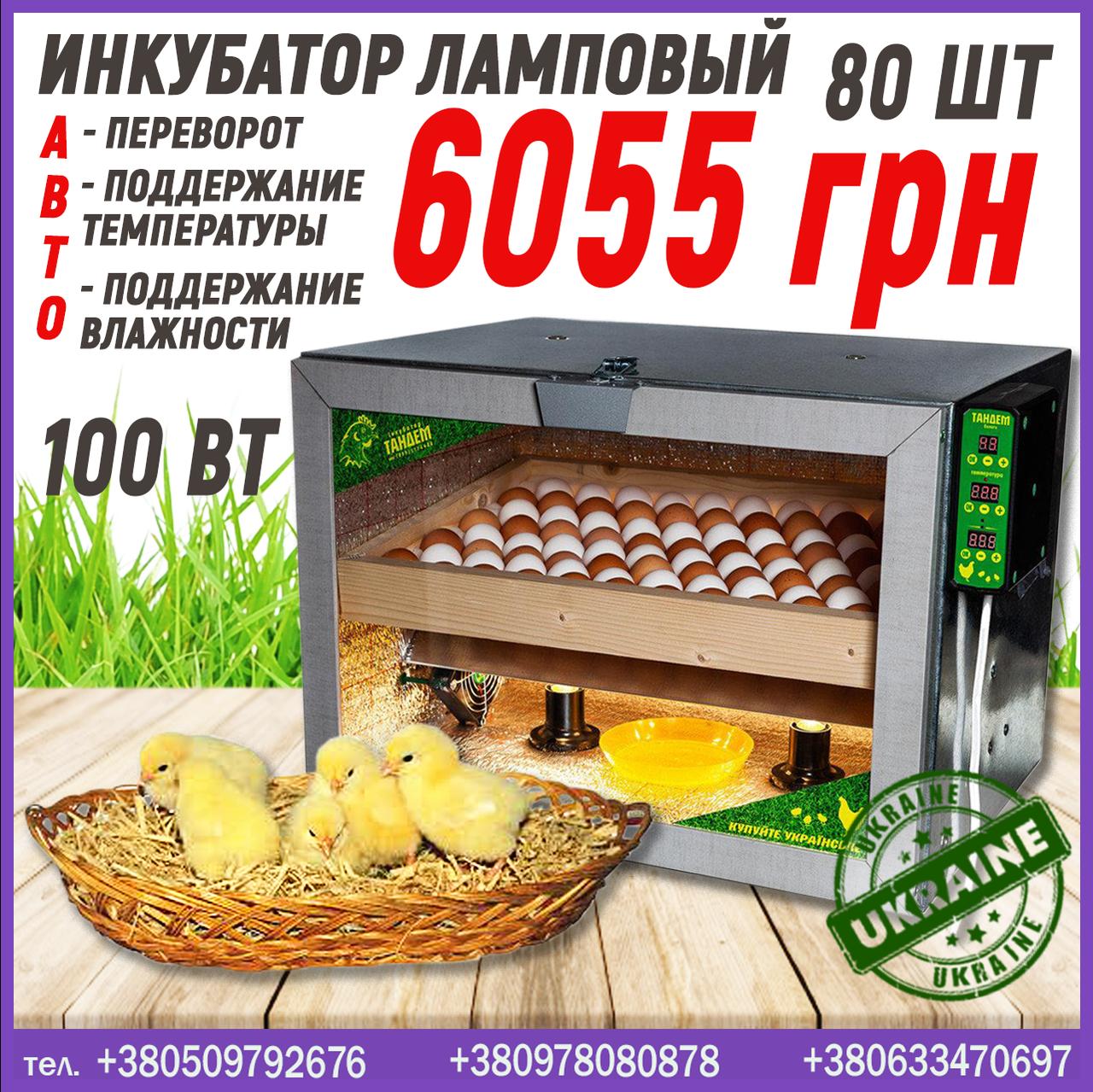 Инкубатор ламповый на 80 яиц с автопереворотом