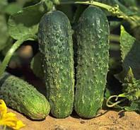 Семена огурца Аякс F1, Nunhems 1 000 семян | профессиональные