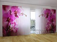 Панорама Пурпурная орхидея