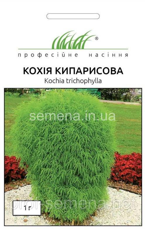 Кохія кипарисова 1 г.